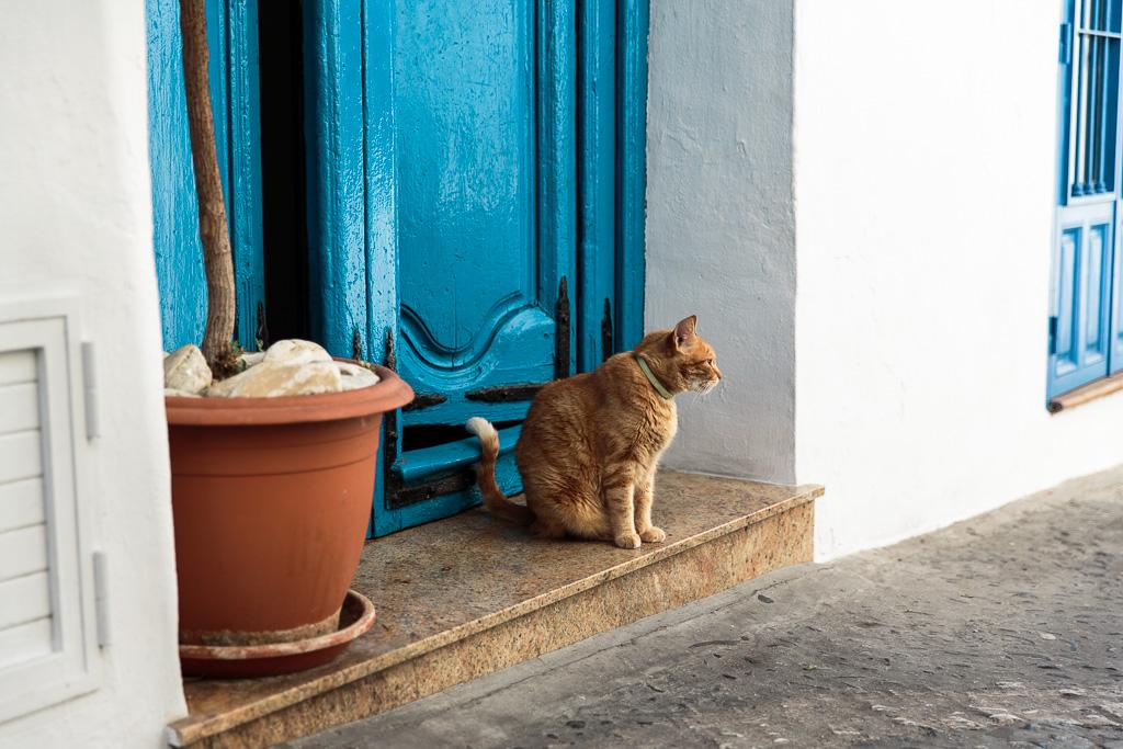 Frigiliana, katt